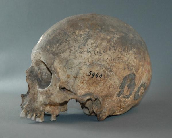 Le crâne de Boubaghla. D. R.