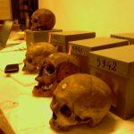 Pour la LDH aussi, les crânes de résistants algériens n'ont rien à faire au Musée de l'Homme. Photo : Ali Farid Belkadi