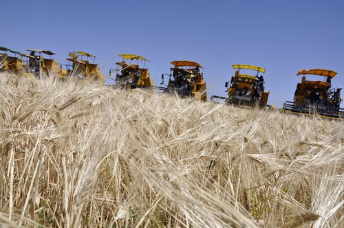La première récolte aura lieu en mai prochain. New Press