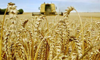 Baisse de la facture d'importation des céréales de 19% en 2016