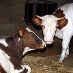 Dix-neuf fermes pilotes seront transformées en «fermes modernes». New Press