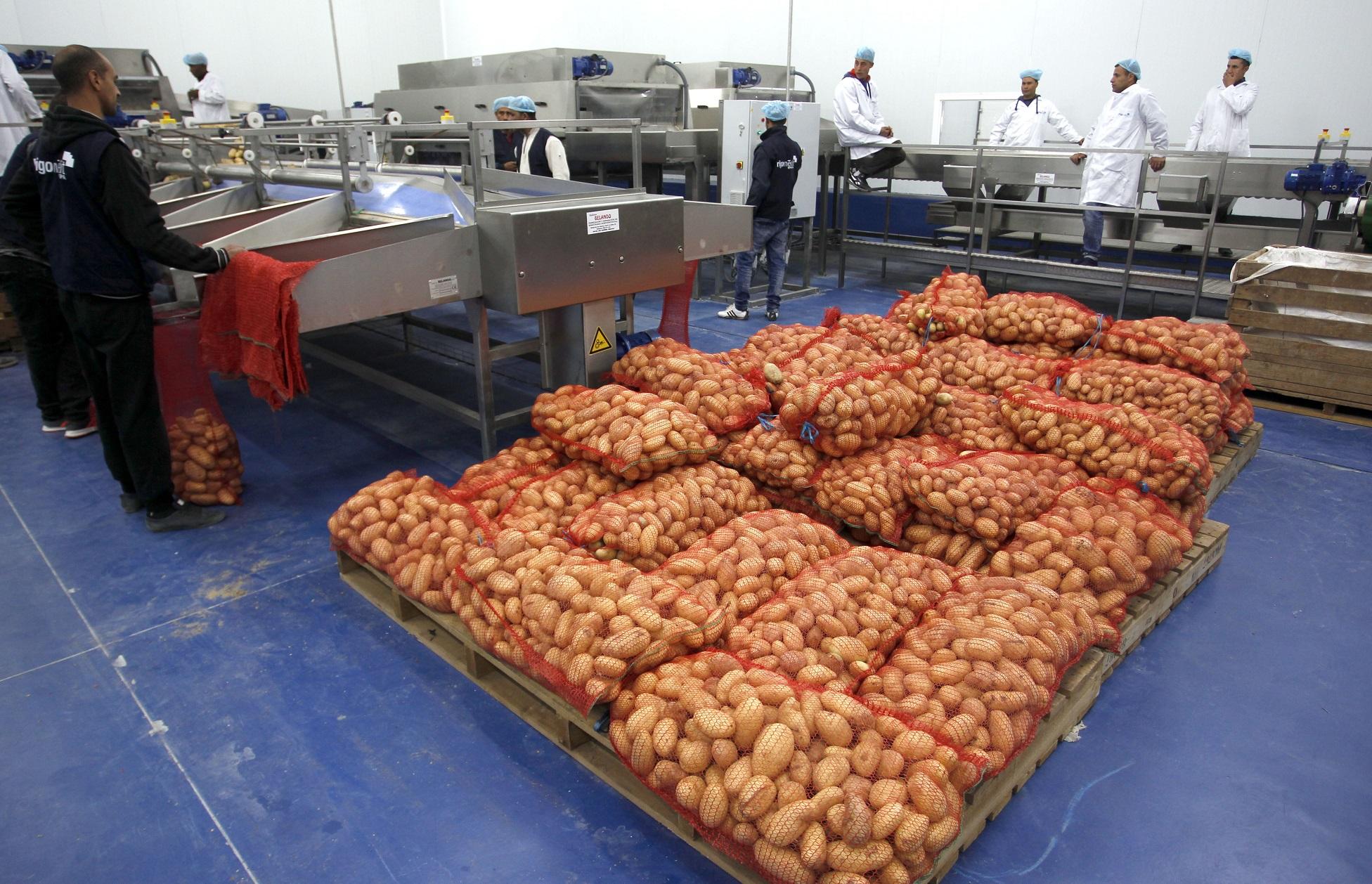 Usine de conditionnement de pomme de terre dans la wilaya d'El-Oued. New Press