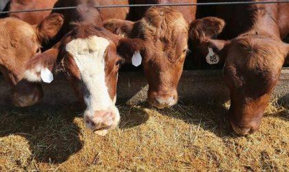 Aliment de bétail : 167 licences d'importation octroyées