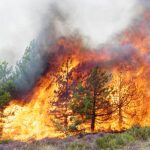 Béjaïa feu de forêt