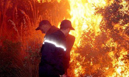 Béjaïa : plus de 100 hectares de végétation brûlés ces dernières 24 heures