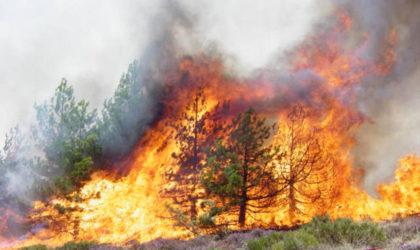 Les feux de forêts font un ravage dans plusieurs wilayas