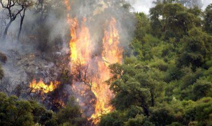 Incendies : graves accusations contre la Direction générale des forêts