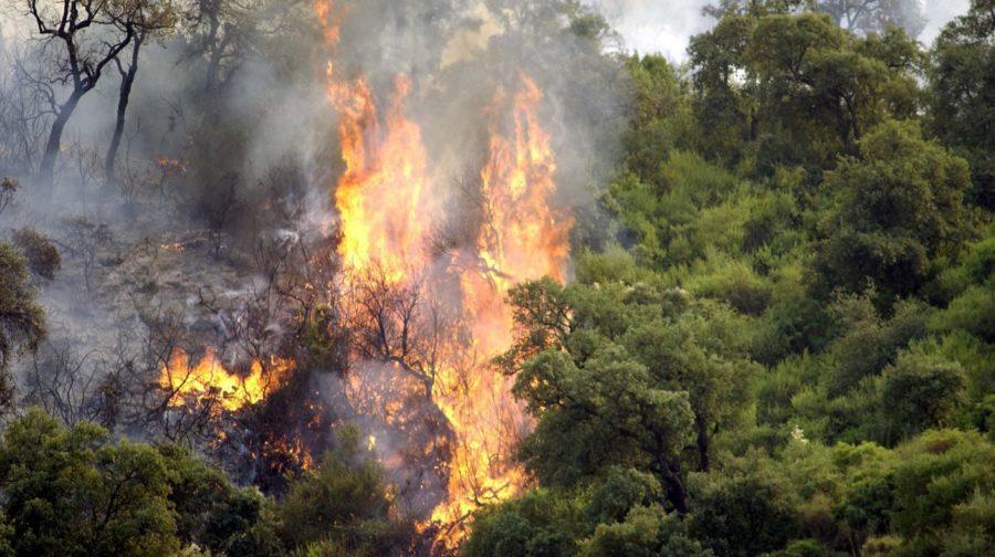 Incendie, plan Orsec