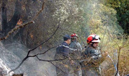 Des pompiers combattent un important feu de forêt à Béjaïa