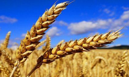 Les prix mondiaux des céréales et des produits laitiers en hausse en juin