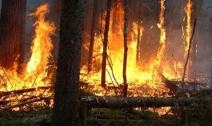 Un responsable du RCD dénonce des incendies suspects en Kabylie