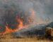 Des feux de forêts ravagent la ville de Médéa