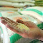 pâtes Exportations