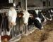 Le ministère de l'Agriculture relance l'activité d'importation de bovins