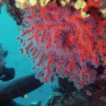 corail arrêtés
