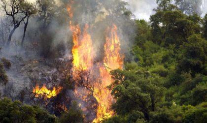 Incendies : 18 pyromanes arrêtés par la Gendarmerie nationale