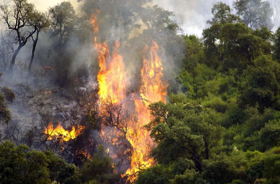 incendies pyromanes