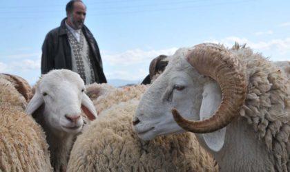 Aïd El-Adha : élargissement des points de vente des moutons à l'ensemble des wilayas