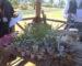 Troc o'plantes : le rendez-vous des passionnés aux Sablettes