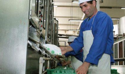 Tissemsilt : lancement des travaux de réalisation d'un deuxième complexe laitier