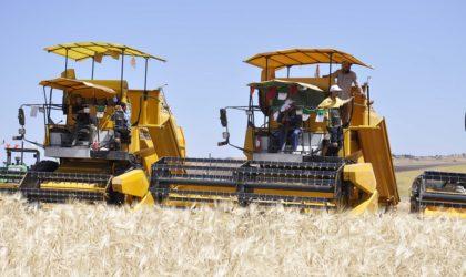 Agriculture: coopération avec les pays arabes