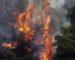 Forêts: les feux ont ravagé près de 54000 hectares en 2017