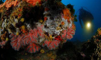 Suspendue depuis 2001 en raison de pratiques illégales: reprise prochaine de l'exploitation du corail