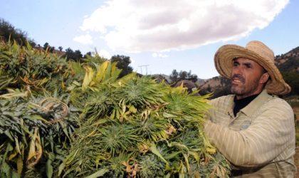 Un journal français publie un reportage sur le tourisme du kif au Maroc