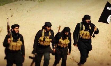 L'AFP présente des djihadistes marocains comme des Algériens