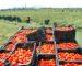 Des produits chimiques dangereux utilisés par certains agriculteurs