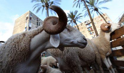 L'Algérie vue par The Guardian : moutons, jeunesse perdue et couvre-feu