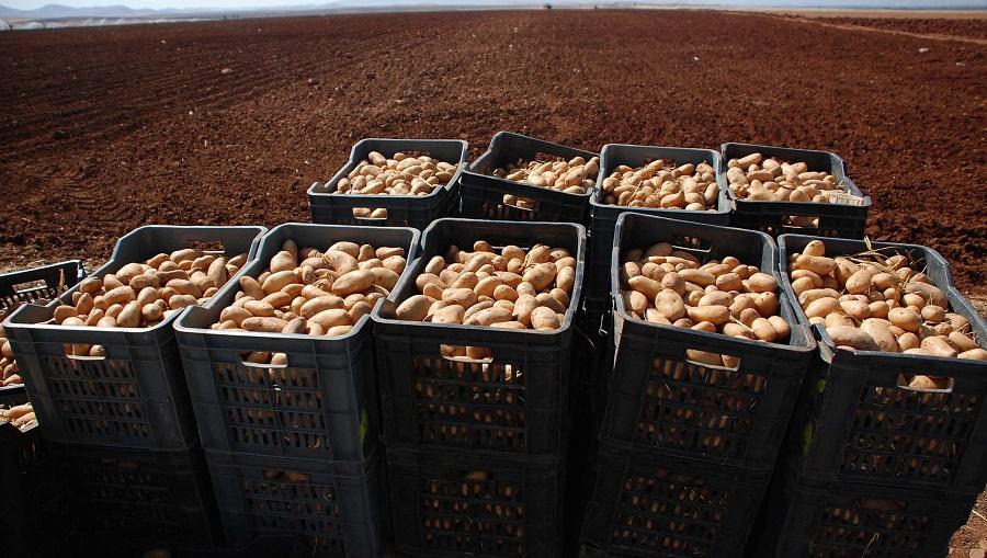 pomme de terre arrière-saison récolte