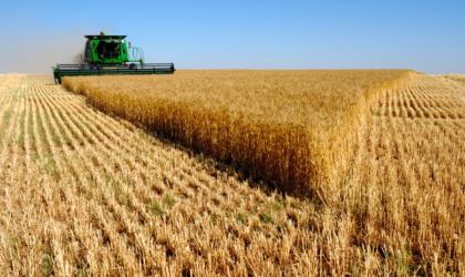 La FAO table sur une baisse de la production de blé en 2018