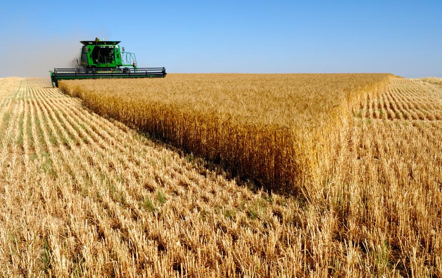blé FAO 2