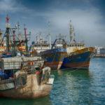 pêche Sahara