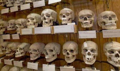 Un dernier recensement fait ressortir 536 crânes de résistants algériens au musée de Paris