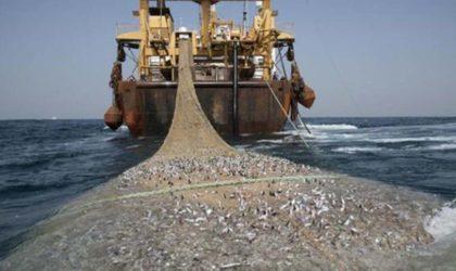 Accord de pêche UE-Maroc: la RASD condamne le feu vert de Bruxelles à l'inclusion du Sahara Occidental