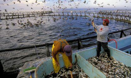Pêche : une campagne de sensibilisation et de formation au profit des professionnels du secteur