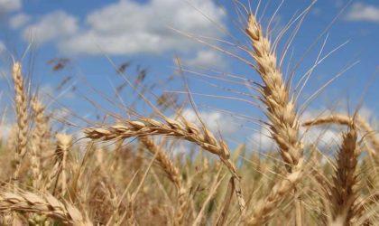 Le prix mondial du blé et de la poudre de lait en hausse