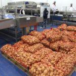 Pomme de terre Algérie pesticides