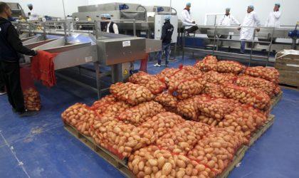 Pourquoi la Russie a-t-elle retourné la pomme de terre à l'Algérie ?