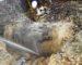 Tizi-Ouzou: des pertes de 100000 m3 d'eau par jour