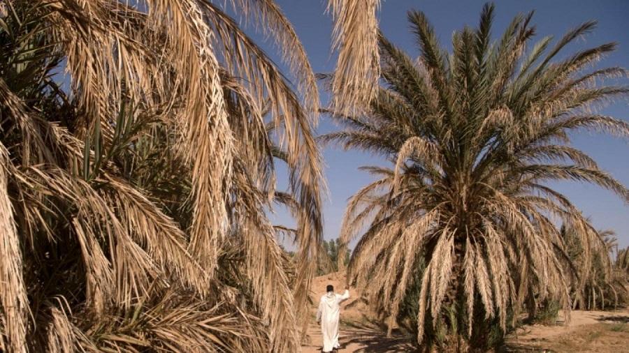 BMS, canicule, oasis