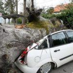 arbre voiture écrasée telemly