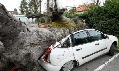 Telemly : des arbres en bordure de route chutent sur des voitures garées