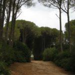 forêt bouchaoui Alger