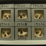 crânes Régence