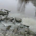 eaux usées baignade Tam