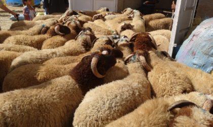 Ministère de l'Agriculture : Alger n'est pas un foyer de la fièvre aphteuse