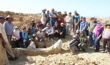 Les restes du Stegodon d'Aïn El H'nech exposés à la presse à Alger